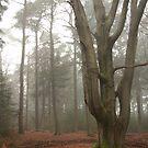 As if sculptured - Beech tree by steppeland