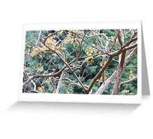 Tree Branch Abstract Greeting Card