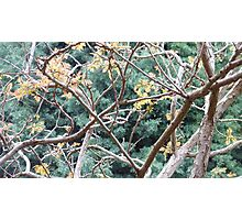 Tree Branch Abstract Photographic Print