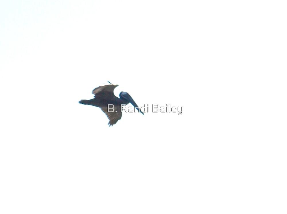 Pelican in flight against white by ♥⊱ B. Randi Bailey