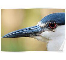Night Heron Close-Up Poster
