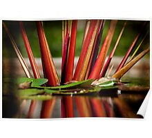Lilly Pad Reflections Poster