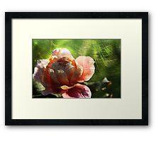 Burnished Rose Framed Print