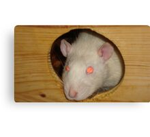 Eddie the rat Canvas Print
