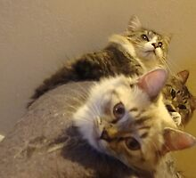 A tower of Kitties by Peggy Burch