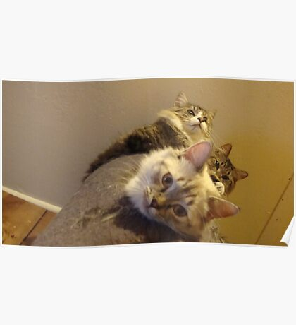 A tower of Kitties Poster