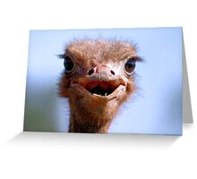 THE OSTRICH - Struthio camelus,  AND.... *What did I have for breakfast.....or lunch? Greeting Card
