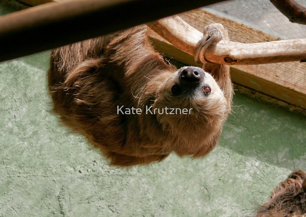 Sloth by Katie Krutzner