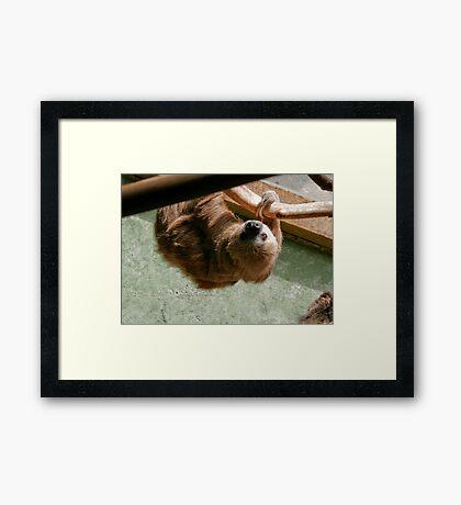 Sloth Framed Print