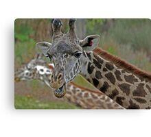 Talking Giraffe Canvas Print