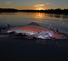 Chasing Rainbows by Brian Pelkey