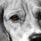 eyes of a mans best friend by avdw