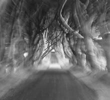 Dark Hedges by erwina