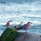 Seagulls by mr-scruffles
