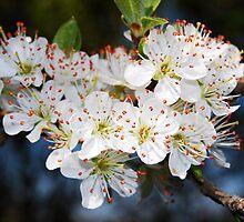 flowers in the sun  by Samuel Green
