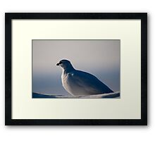 The Arctic Chicken (Aka the ptarmigan) Framed Print