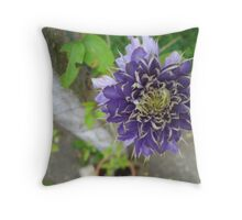 Canny Clematis - Surrey Throw Pillow