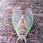 Cicada Bug Fresh Out of Old Skin by Barberelli