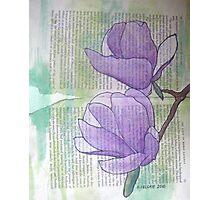 Magnolias IV Photographic Print