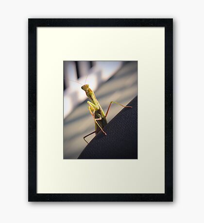 Well Hello There... Framed Print