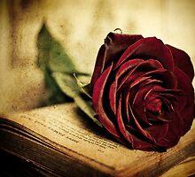 Rose Red by Erin Reynolds