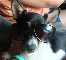 Ben showing off his shades by Peggy Burch