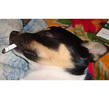 Is that dog smoking? Photographic Print