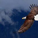 Wonderful World of Eagles by EagleHunter