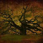 The Angel Oak in Charleston SC by Susanne Van Hulst