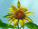 Happy Sunflower by FrankieCat