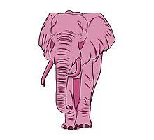 I See A Pink Elephant Photographic Print
