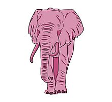 I See A Pink Elephant Photographic Print