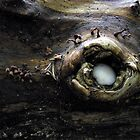 Dragon Eye by Carla Wick/Jandelle Petters