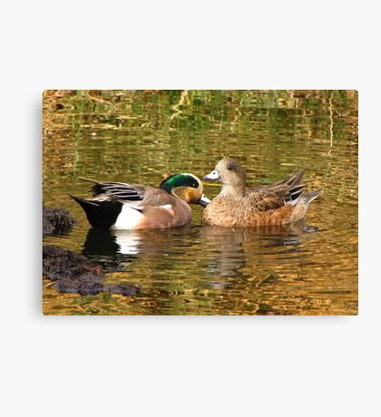 American Wigeon Pair Canvas Print