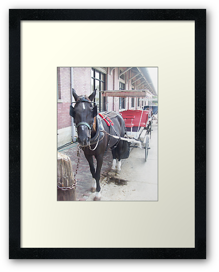 Natchez Carriage Rides by Dan McKenzie
