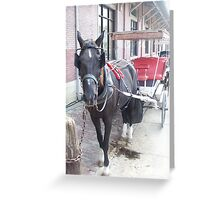 Natchez Carriage Rides Greeting Card
