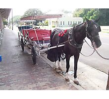 Natchez Carriage Rides - Natchez, Mississippi Photographic Print