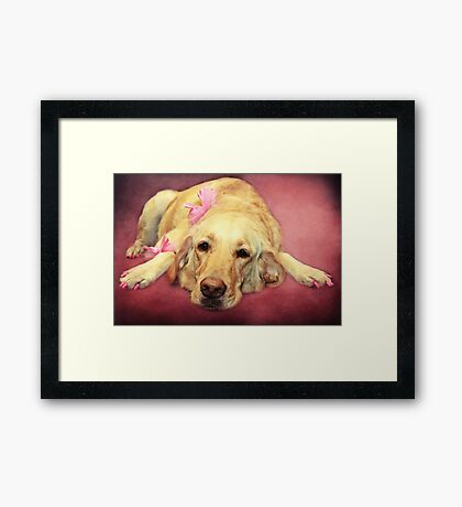Morgan.... the Madam of the Seeing Eye Dogs Framed Print