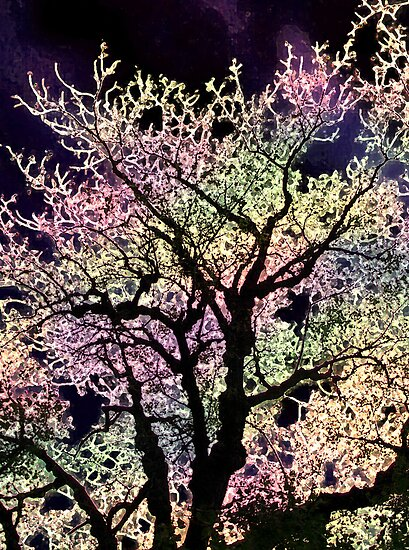 evening tree by brian gregory