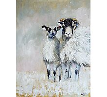 Ewes Looking at Me? Photographic Print