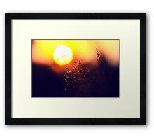 The Beauty Of Weeds #4 Framed Print