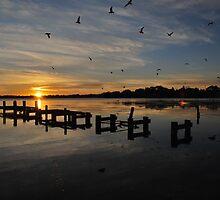Crowded Morning.Australia. by Warren  Patten