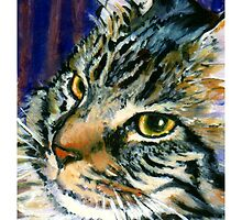 Fearghus: Maine Coon by Maggie Keegan