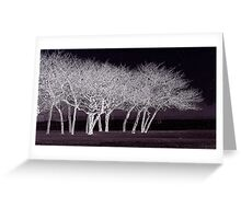 frosted night Greeting Card