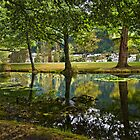 Garden Reflections by Chris  Randall