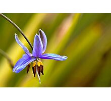 Small Flower - Geelong Photographic Print