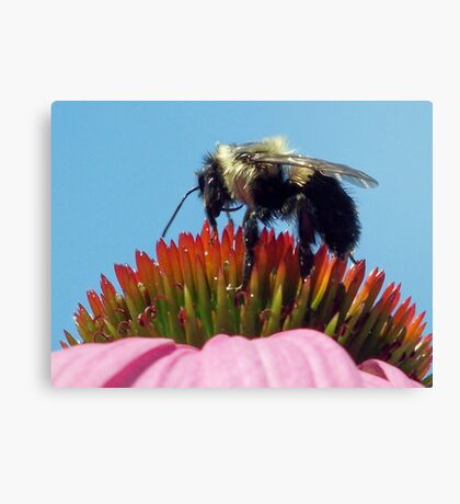 """gathering pollen"" Canvas Print"