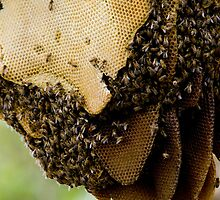A wild bee-hive by Mark Elshout