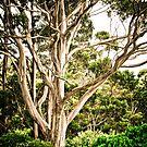 Faraway Tree by catrionam
