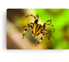 Macro Spider Canvas Print